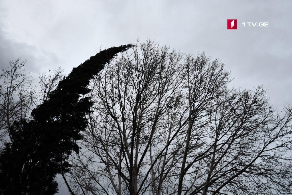 По прогнозам синоптиков, с 20 февраля ветер стихнет