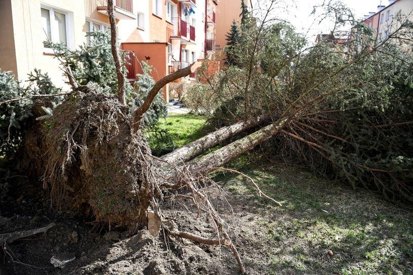 Güclü küləyə görə, Polşada 400 min ev elektrik enerjisiz qaldı
