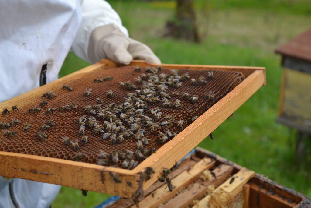 სურსათის ეროვნული სააგენტო - ფუტკრის დაცემა აზიური ფაროსანას საწინააღმდეგოდ ჩატარებული წამლობის შედეგად არ მომხდარა
