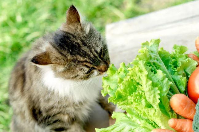 ხორცისმჭამელ შინაურ ცხოველთა ვეგანად გადაქცევას სულ უფრო მეტი მფლობელი ცდილობს