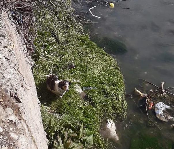 Спасатели вытащили собаку, упавшую в реку в Гори, целой и невредимой