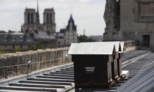 პარიზის ღვთისმშობლის ტაძრის სახურავზე მცხოვრები ფუტკრები ხანძარს გადაურჩნენ