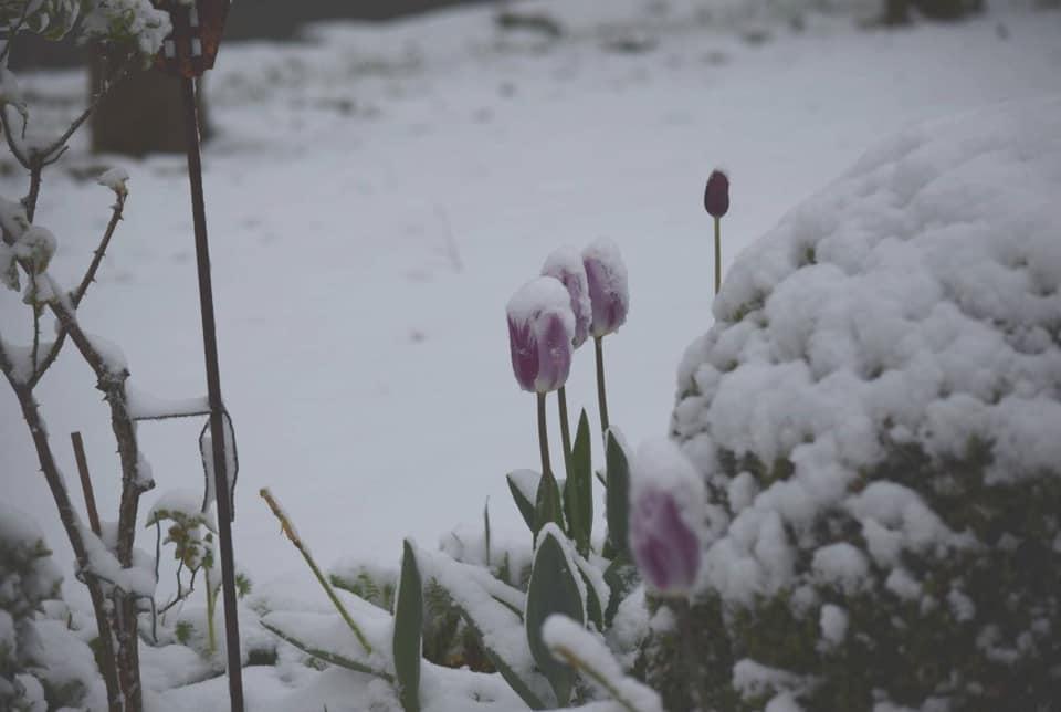 ბელგიის სამხრეთ რეგიონებში თოვლის სიმაღლე 7 სანტიმეტრს აღწევს