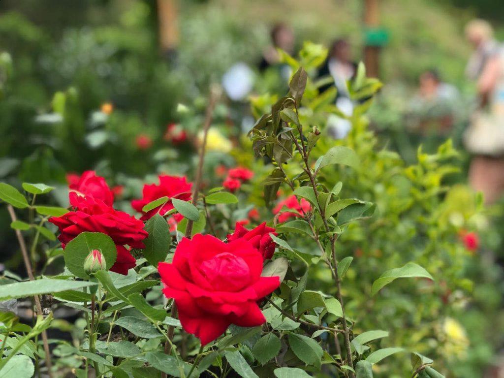 """ბოტანიკურ ბაღში მწვანე გამოფენა-გაყიდვა """"გრიინ ექსპო 2019"""" გაიმართა [ფოტო]"""