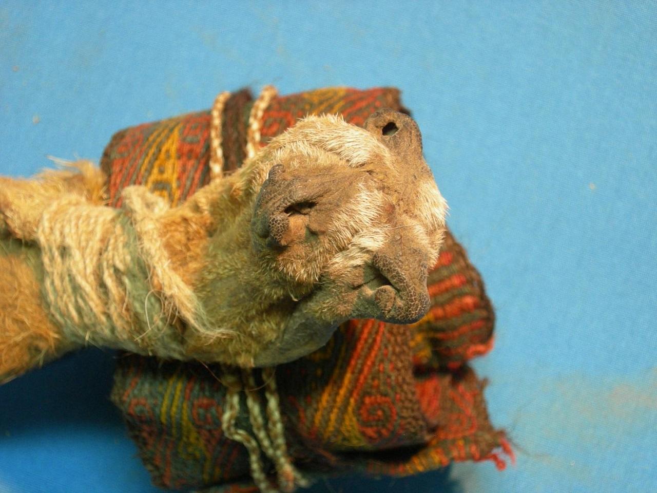 აღმოაჩინეს უძველესი შამანის ჩანთა, რომელშიც მრავალი ფსიქოტროპული საშუალება, მათ შორის კოკაინიც დევს