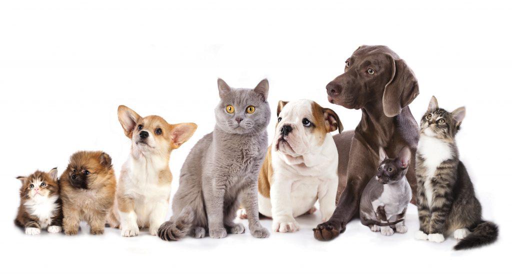 მრავალბინიანი საცხოვრებელი სახლის ბინაში 5-ზე მეტი შინაური ბინადარი ცხოველის ყოლა დაჯარიმებას გამოიწვევს