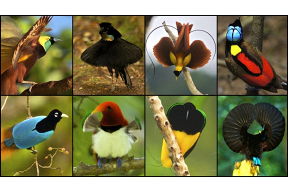 ჩვენი ფერმა - ეგზოტიკური ფრინველების მოშენება