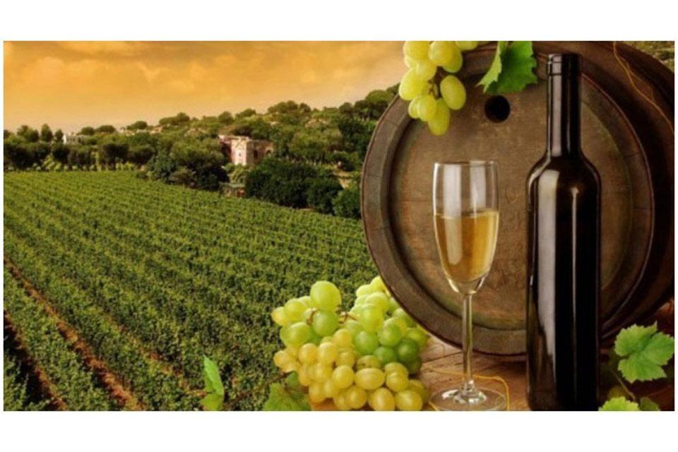 ჩვენი ფერმა - როგორ ყალიბდებიან მომავალი მევენახე-მეღვინეები და როგორ ვითარდება ღვინის ინდუსტრია