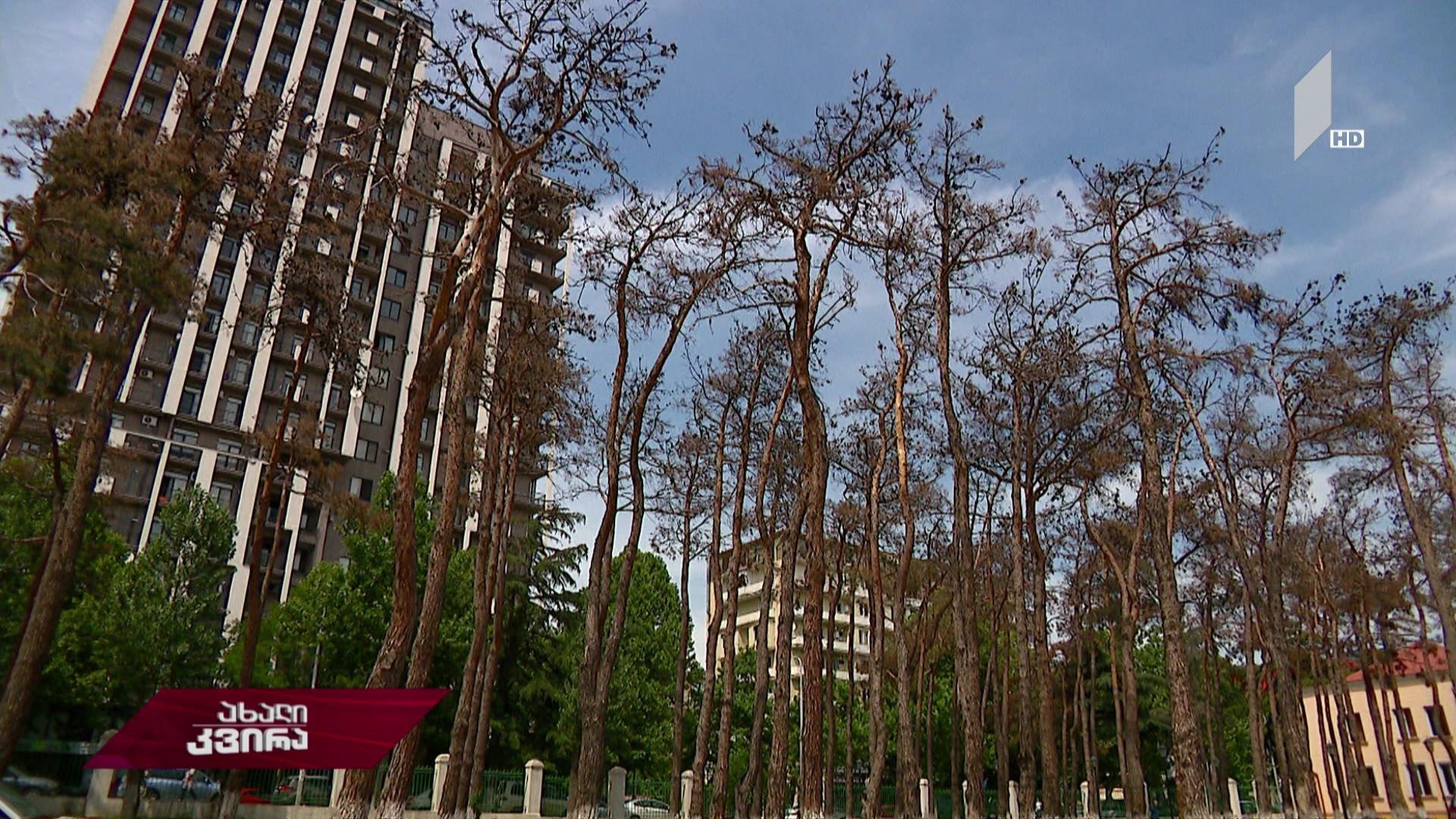 გამხმარი ხეების ქალაქი