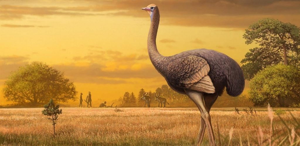 ევროპაში გიგანტური ფრინველის ნამარხი აღმოაჩინეს - მისი წონა ნახევარ ტონამდე უნდა ყოფილიყო