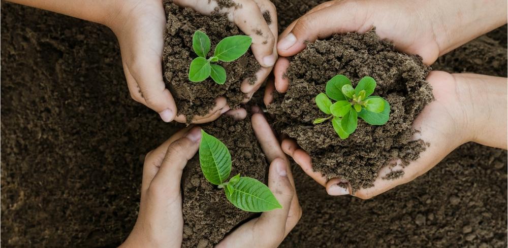კლიმატის ცვლილების შეჩერება შესაძლებელია, თუ ახლავე ხეების დარგვას დავიწყებთ - ახალი კვლევა