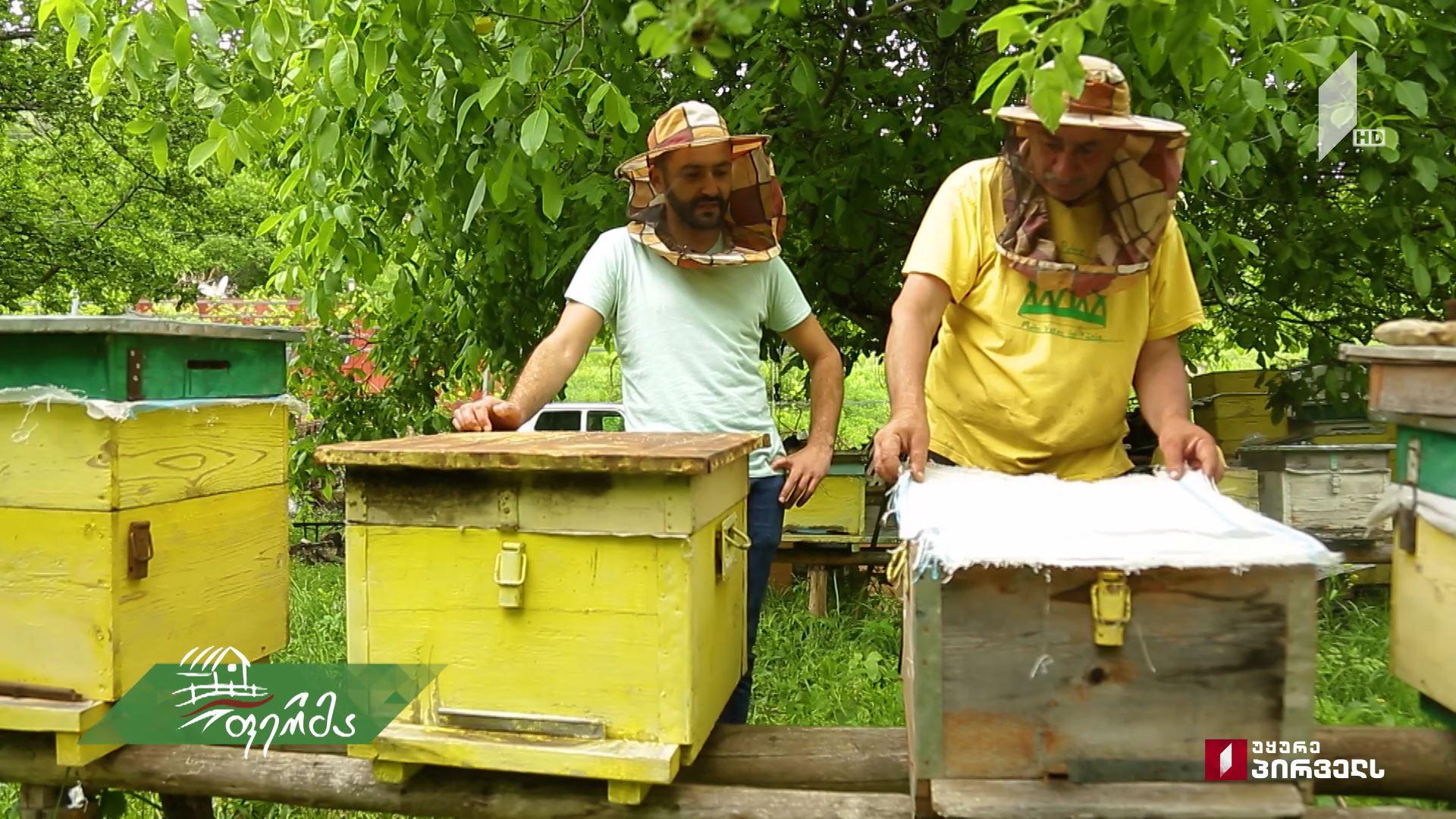 #ფერმა საოჯახო მეურნეობა და გამოცდილი ფერმერის რჩევები მეფუტკრეობისა და მეკალმახეობის განვითარებისთვის
