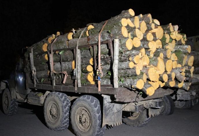 მარტვილის მუნიციპალიტეტში ხე-ტყის უკანონო ტრანსპორტირების ფაქტი გამოვლინდა