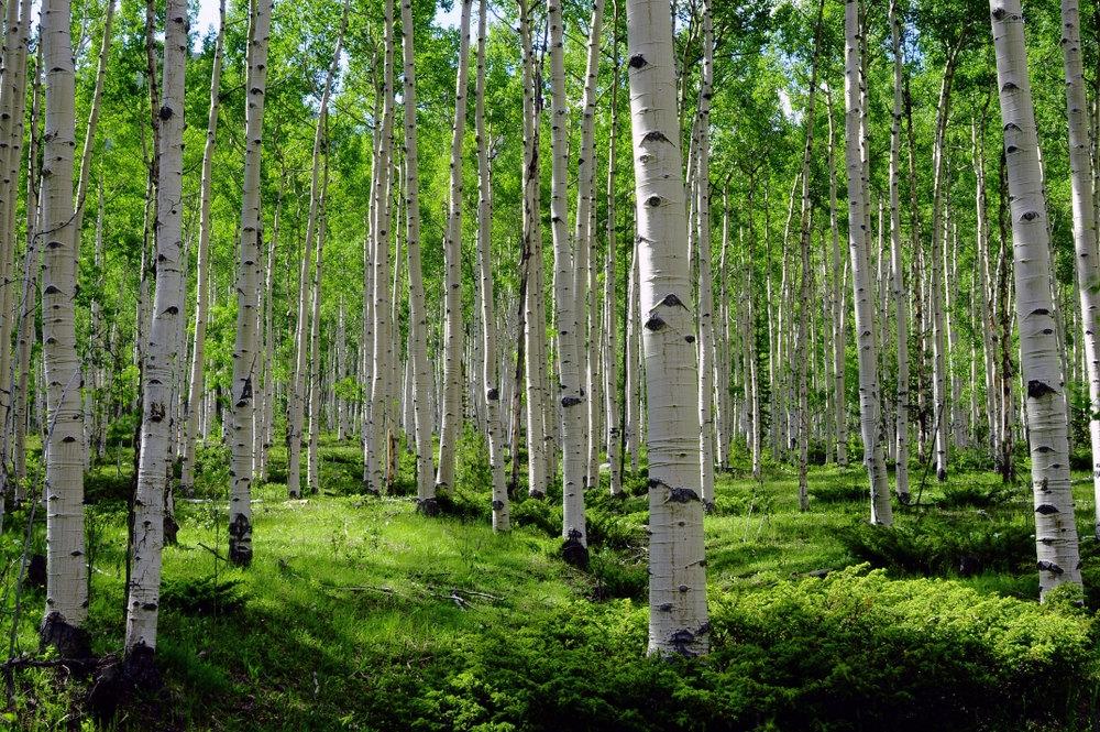 ჩვენი ფერმა -  ტყის არამერქნული პროდუქტების შეგროვება და გადამუშავება