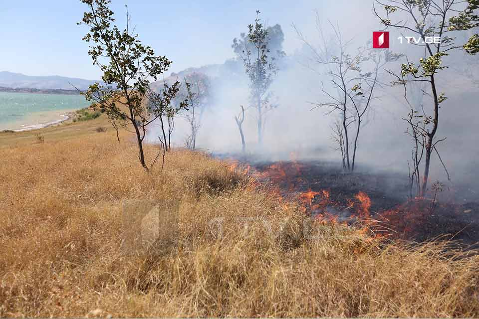 Fire broke out near Tbilisi Sea territory [Photos]