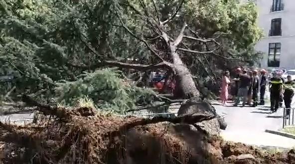 На улице Косты Хетагурова в Тбилиси упало дерево и повредило автомобиль