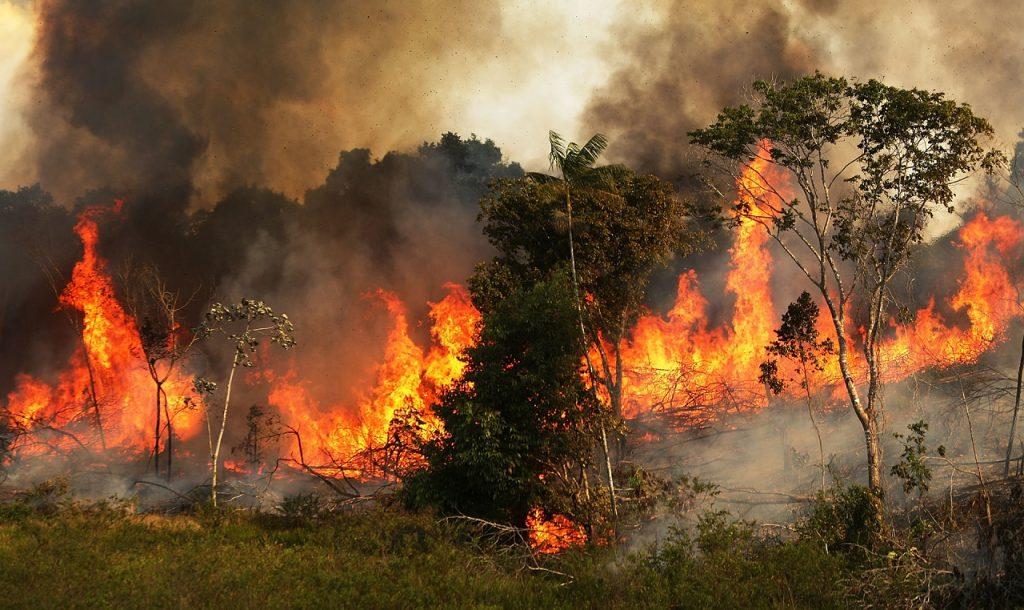 დედამიწის ფილტვები იწვის - ამაზონის ტყე ცეცხლის ალშია გახვეული