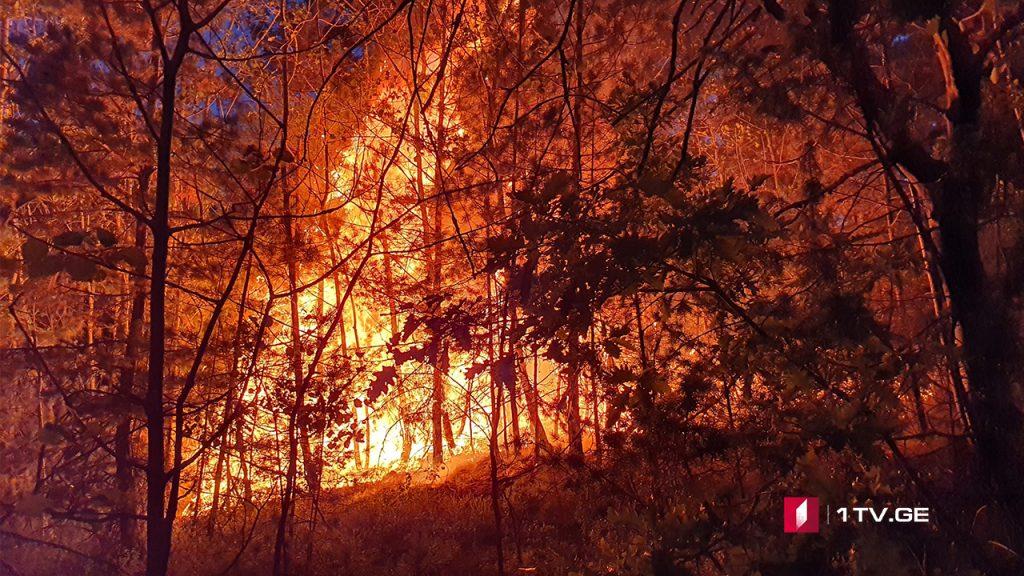 У села Сакавре ведутся работы по локализации пожара