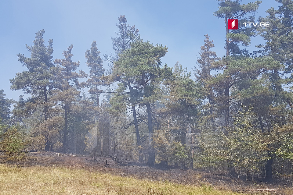 Forestry Agency calls on population for being careful about fires