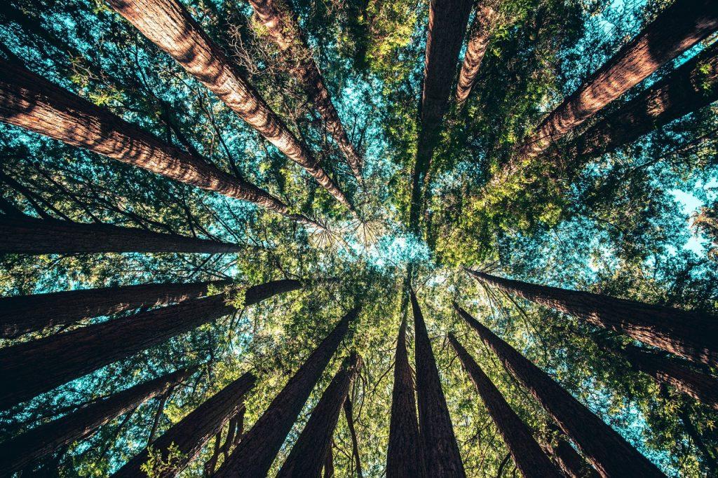 ის, რაც ხეებისა და კლიმატის ცვლილებაში მათი როლის შესახებ აუცილებლად უნდა ვიცოდეთ