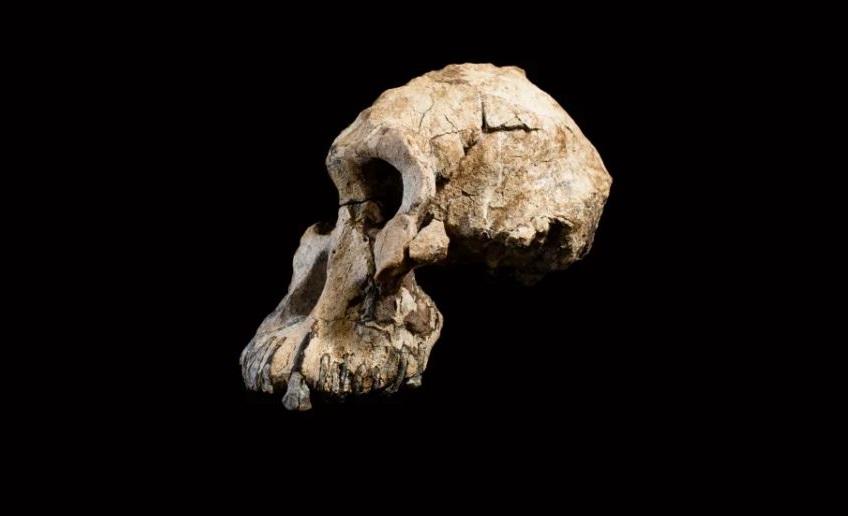 მეცნიერებმა ადამიანის ერთ-ერთი უძველესი წინაპრის სახე აღადგინეს