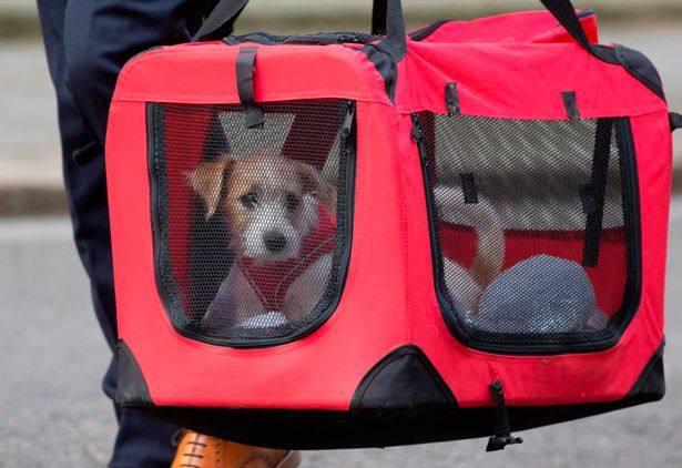 ბრიტანეთის პრემიერ-მინისტრის რეზიდენციაში ცნობილ კატა ლარისთან ერთად, ძაღლიც იცხოვრებს