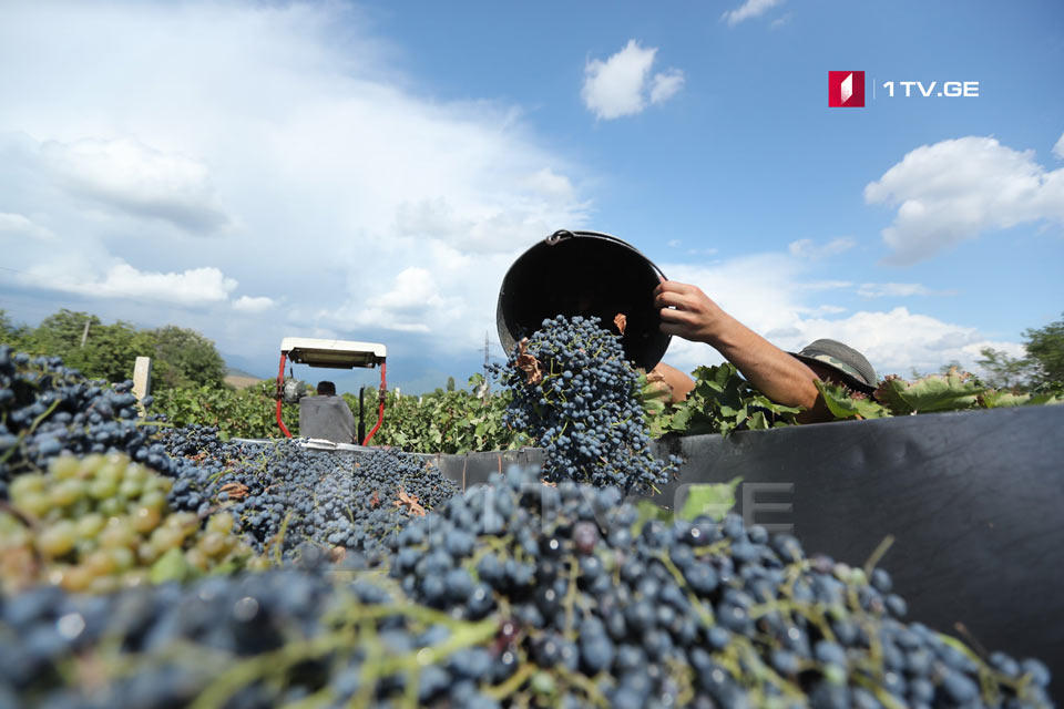 Around 740 tons of grapes processed during the 2020 grape harvest