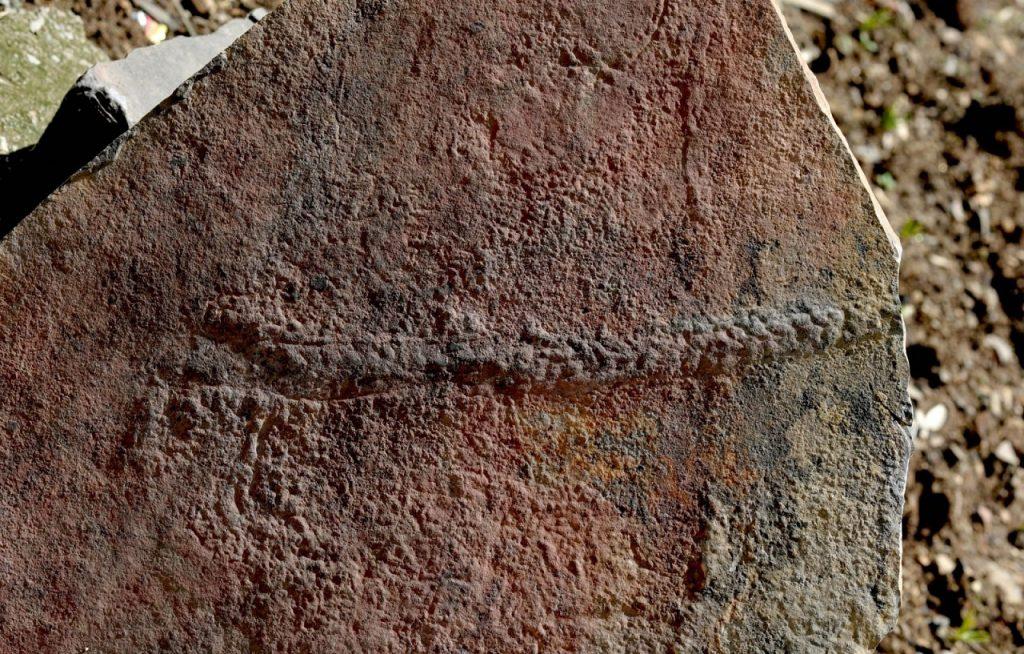 აღმოჩენილია დედამიწის ზედაპირზე ცხოველის მიერ დატოვებული ერთ-ერთი უძველესი ნაკვალევი