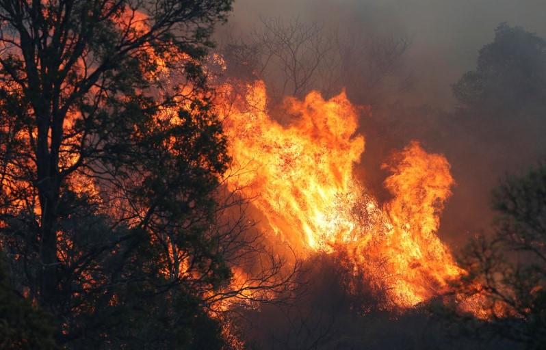 ავსტრალიაში ტყის ხანძრების შედეგად 21 სახლი გადაიწვა