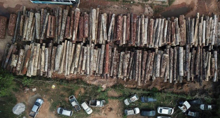 """""""ჰუმან რაითს ვოჩი"""" - ამაზონის ტყეში არსებული რესურსების გამო ბოლო ათწლეულში 300-ზე მეტი ადამიანი დაიღუპა"""