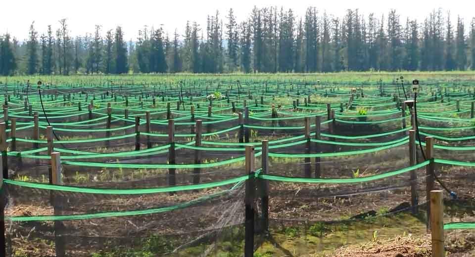 В Самегрело открылась ферма по выращиванию улиток