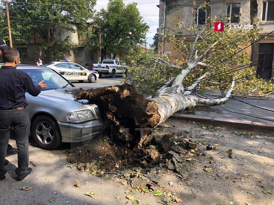 Сильный ветер повалил несколько деревьев в Тбилиси и Рустави