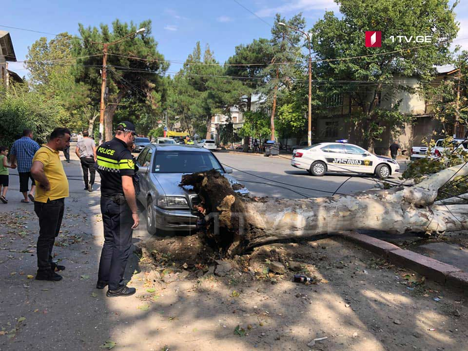 Strong wind un-roots several trees in Tbilisi and Rustavi