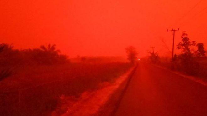 ინდონეზიაში,ჯამბის პროვინციაში ტყის ხანძრის გამო, ცა გაწითლდა [ფოტო, ვიდეო]