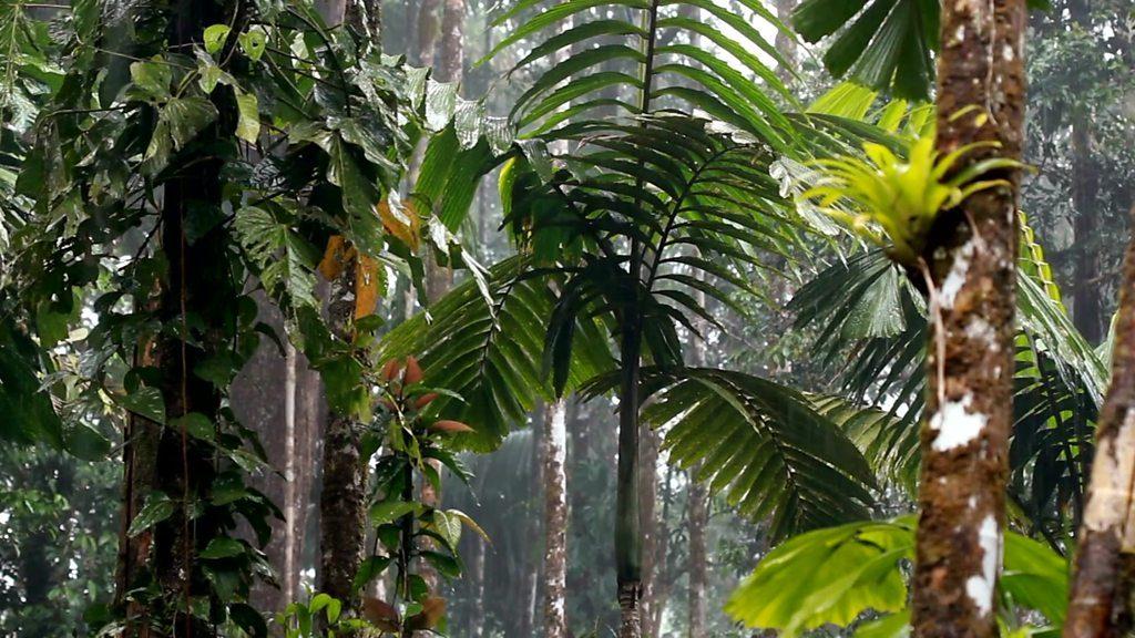 ბრაზილიის პრეზიდენტი - ამაზონის ტყე ჩვენია
