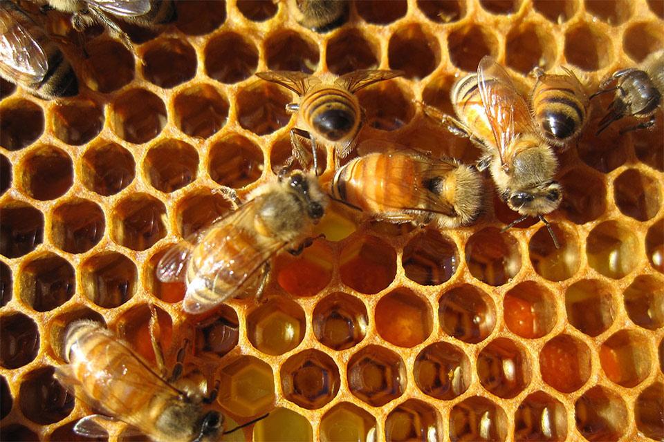 ჩვენი ფერმა - მეფუტკრეობა, ქართული თაფლის საექსპორტო პოტენციალი