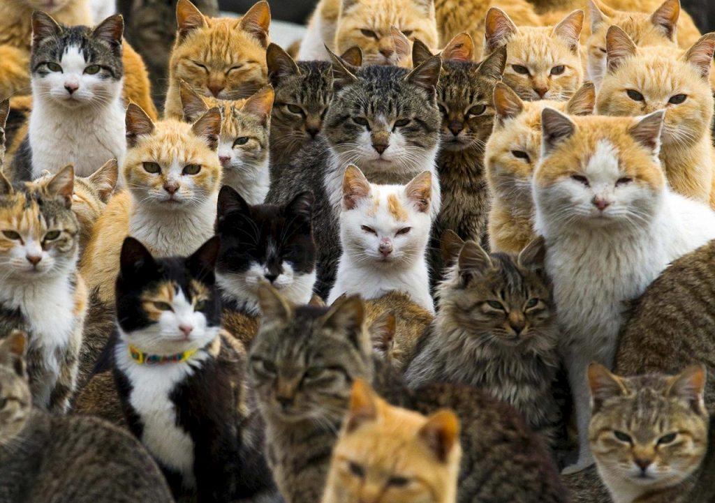 კატები პატრონებთან ძაღლებზე მეტად არიან მიჯაჭვული - ახალი კვლევა
