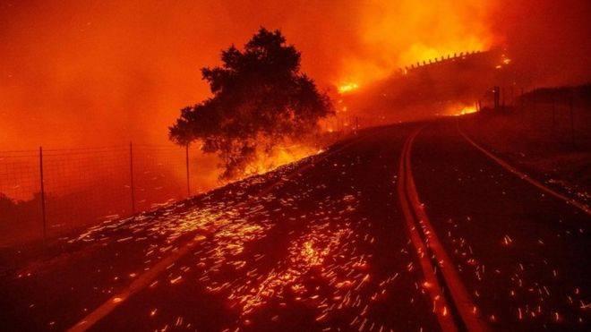 კალიფორნიის შტატში ტყის მასივები იწვის
