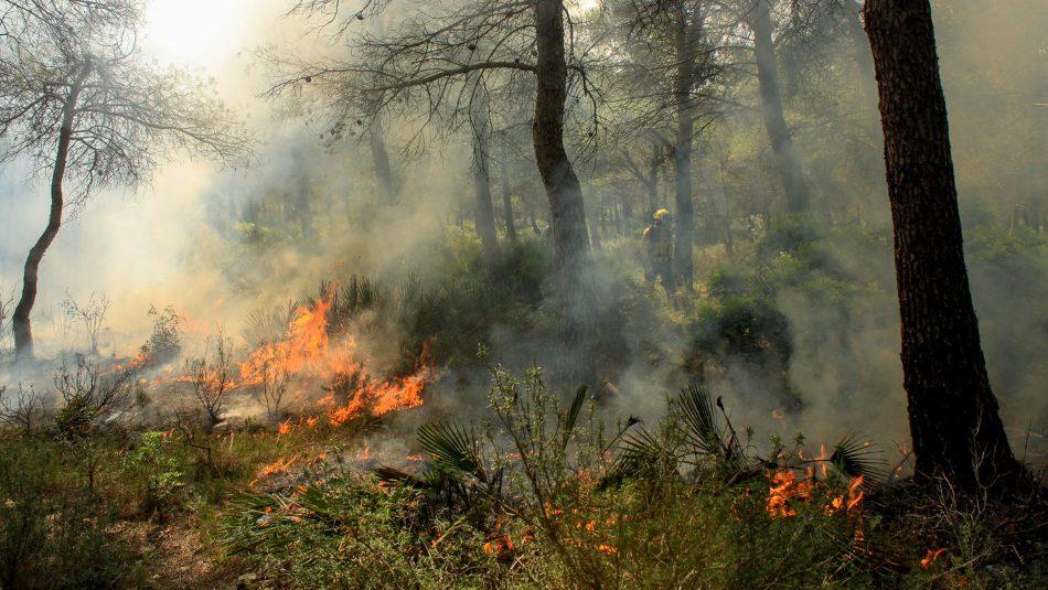 მექსიკაში, ტყის მასივზე ხანძრის შედეგად სამი ადამიანი დაიღუპა