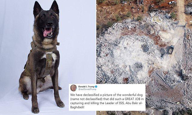 დონალდ ტრამპი აბუ ბაქრ ალ-ბაღდადის ლიკვიდაციის ოპერაციაში მონაწილე ძაღლის ფოტოს აქვეყნებს