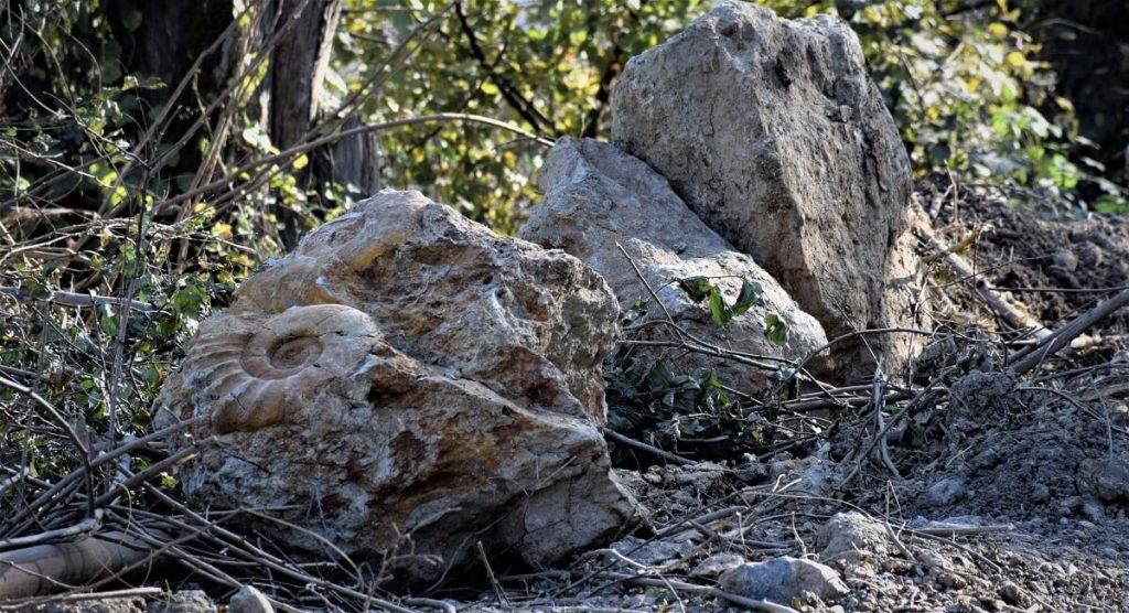 ხარაგაულში 100 მლნ წლის წინანდელი გიგანტური მოლუსკები აღმოაჩინეს
