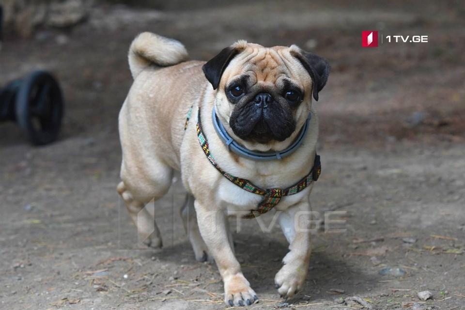 როგორ შეესაბამება ადამიანის ასაკი ძაღლისას — შექმნილია ახალი ფორმულა