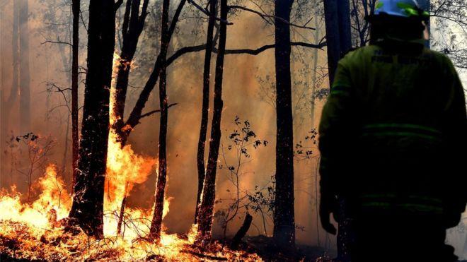 ავსტრალიაში ტყის ხანძრის განზრახ გაჩენაში მეხანძრეს ადანაშაულებენ