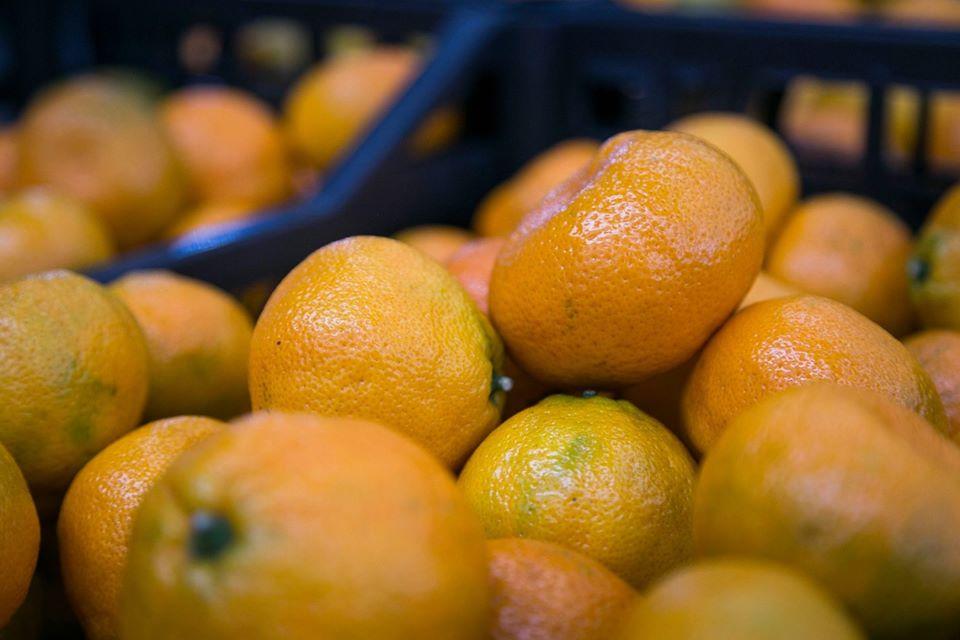 Из Грузии за пять месяцев было экспортировано мандаринов на сумму 17,5 млн долларов