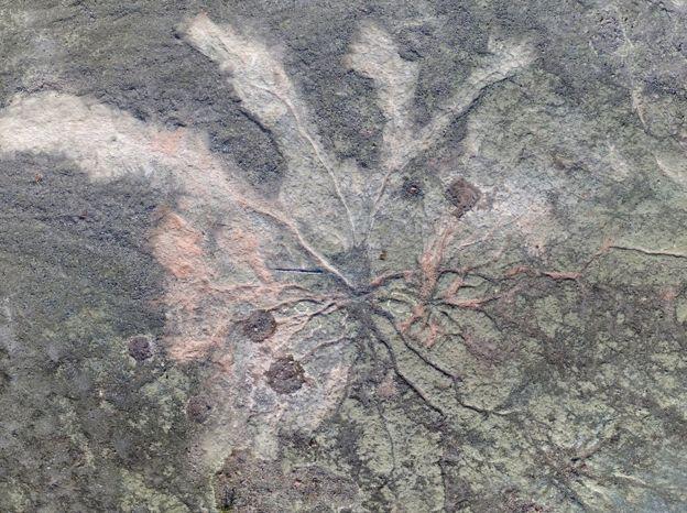 ნიუ-იორკის შტატში მსოფლიოში უძველესი ნამარხი ტყე აღმოაჩინეს