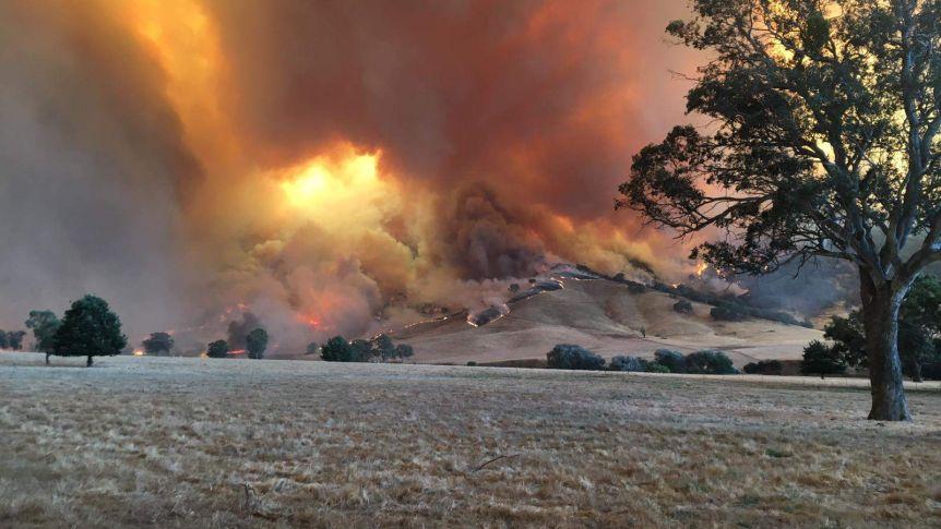 ავსტრალიაში ხანძრის რამდენიმე ახალი კერაა, ცეცხლი ალპურ ზონაში მდებარე ქალაქებს უახლოვდება