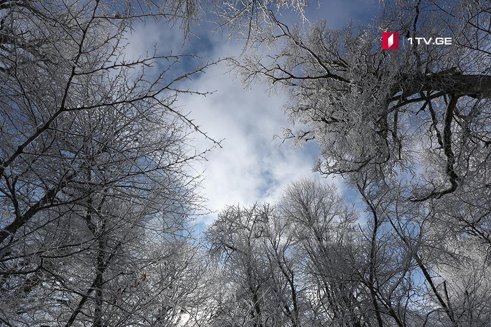 თოვლი საბადურის ტყეში - ფოტოამბავი