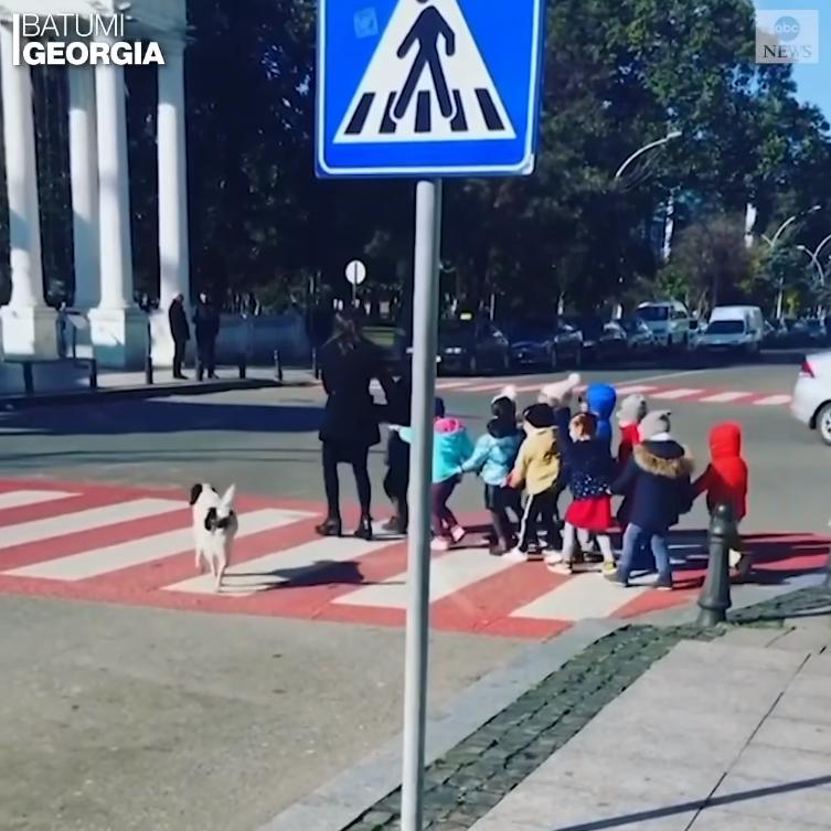 Բաթումիում շունն օգնում է երեխաներին անցնել ճանապարհը (վիդեո)