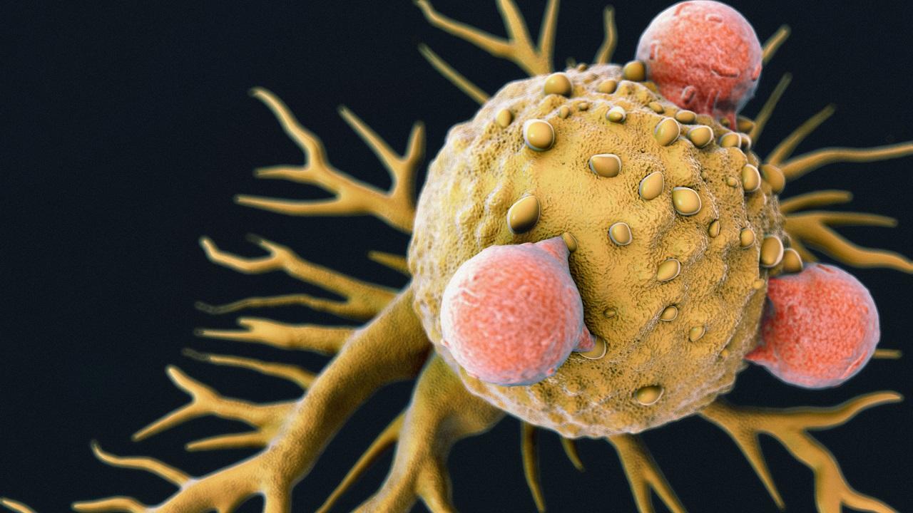 აღმოჩენილია ახალი სახის უჯრედები, რომლებმაც ლაბორატორიაში მრავალი სახეობის კიბო გაანადგურა