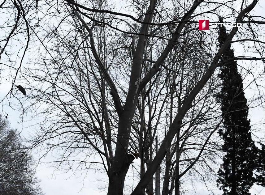 25-27 января в Грузии ожидается погода без осадков